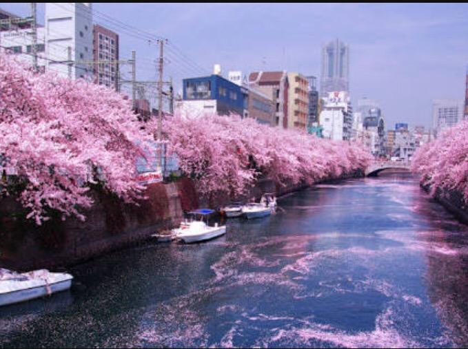 img 1831 【隅田川桜まつり】屋形船と川面に浮かぶ桜の花びら